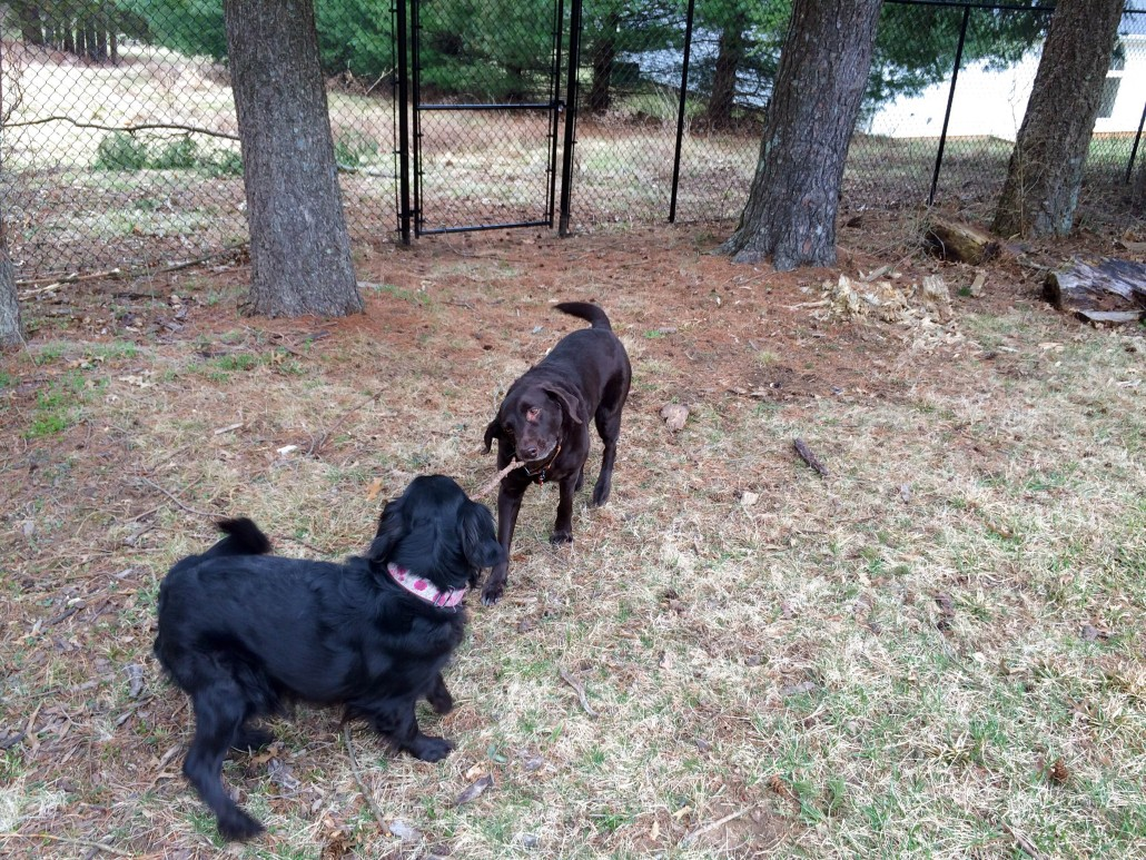 Aria and Elphaba play with a stick in their new backyard.