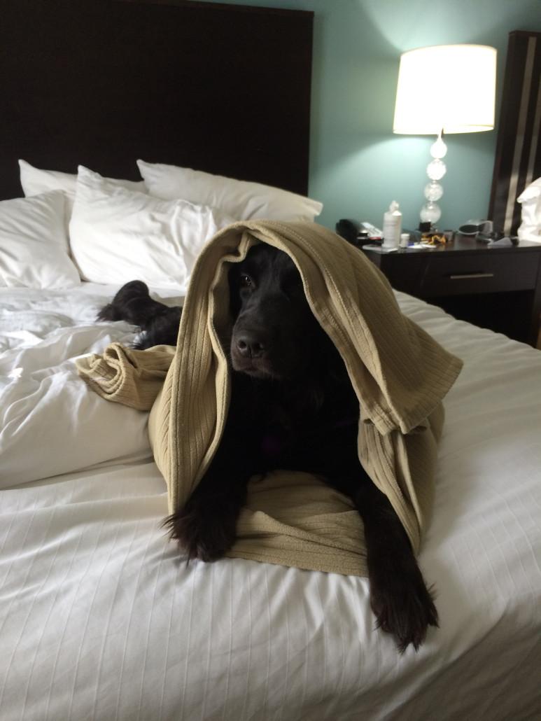 service dog travel