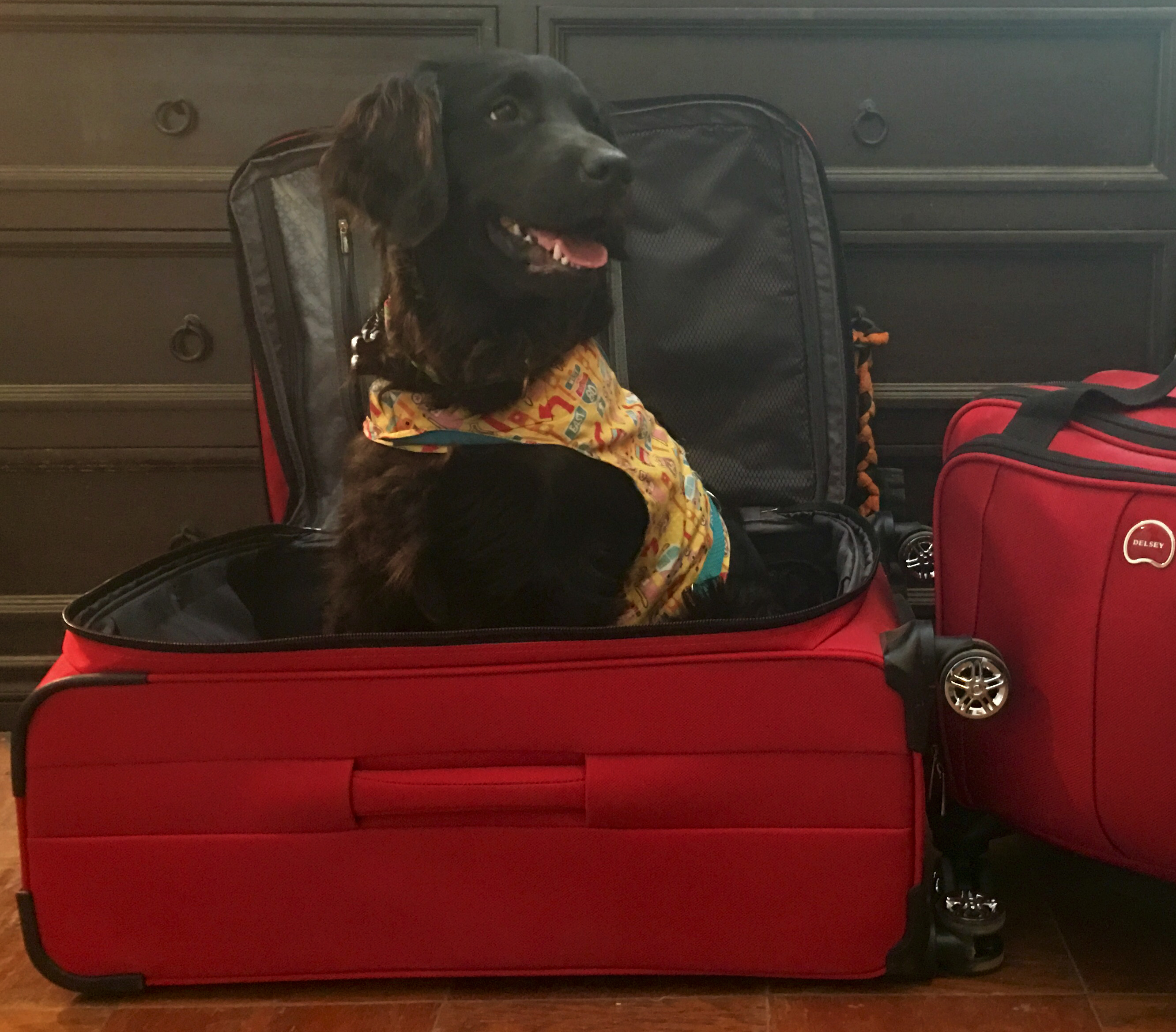 Traveling with a service dog