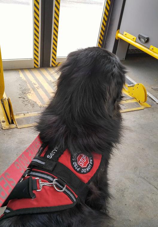 bus travel service dog