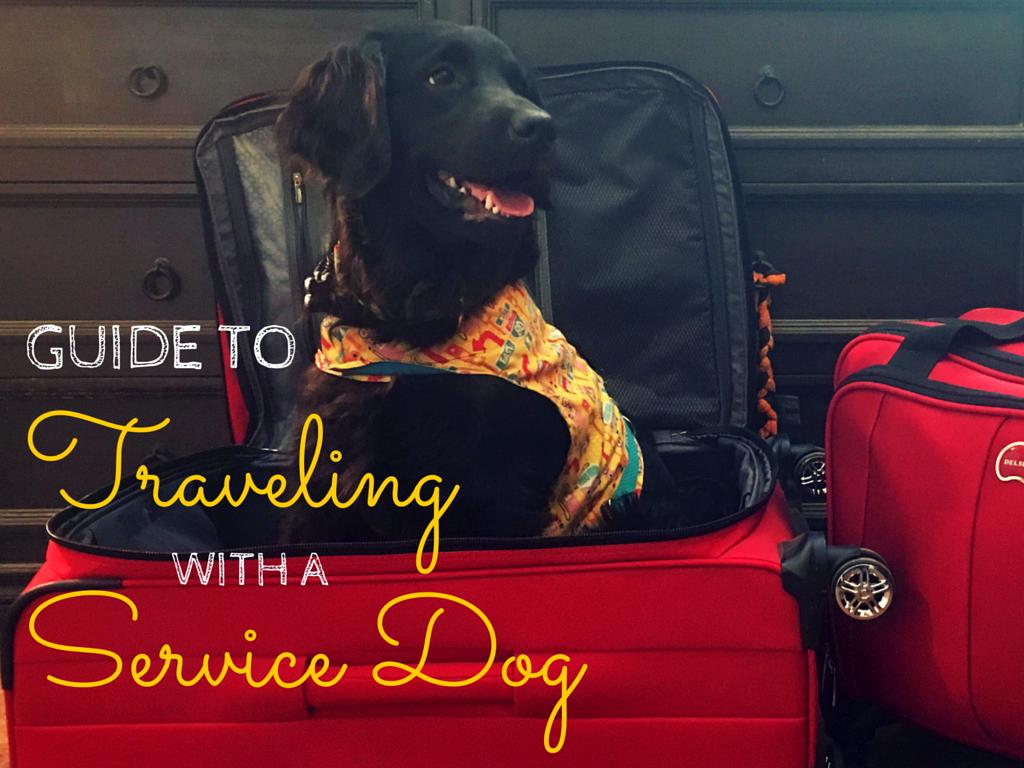 travelingwithaservicedogposter